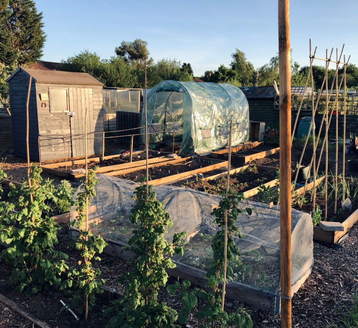 Our Allotment: Spring 2020Update
