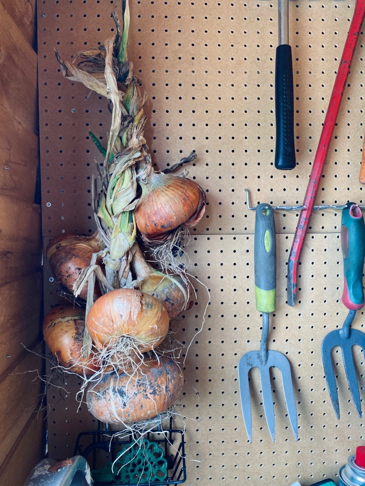 Our Allotment: Autumn 2020Update